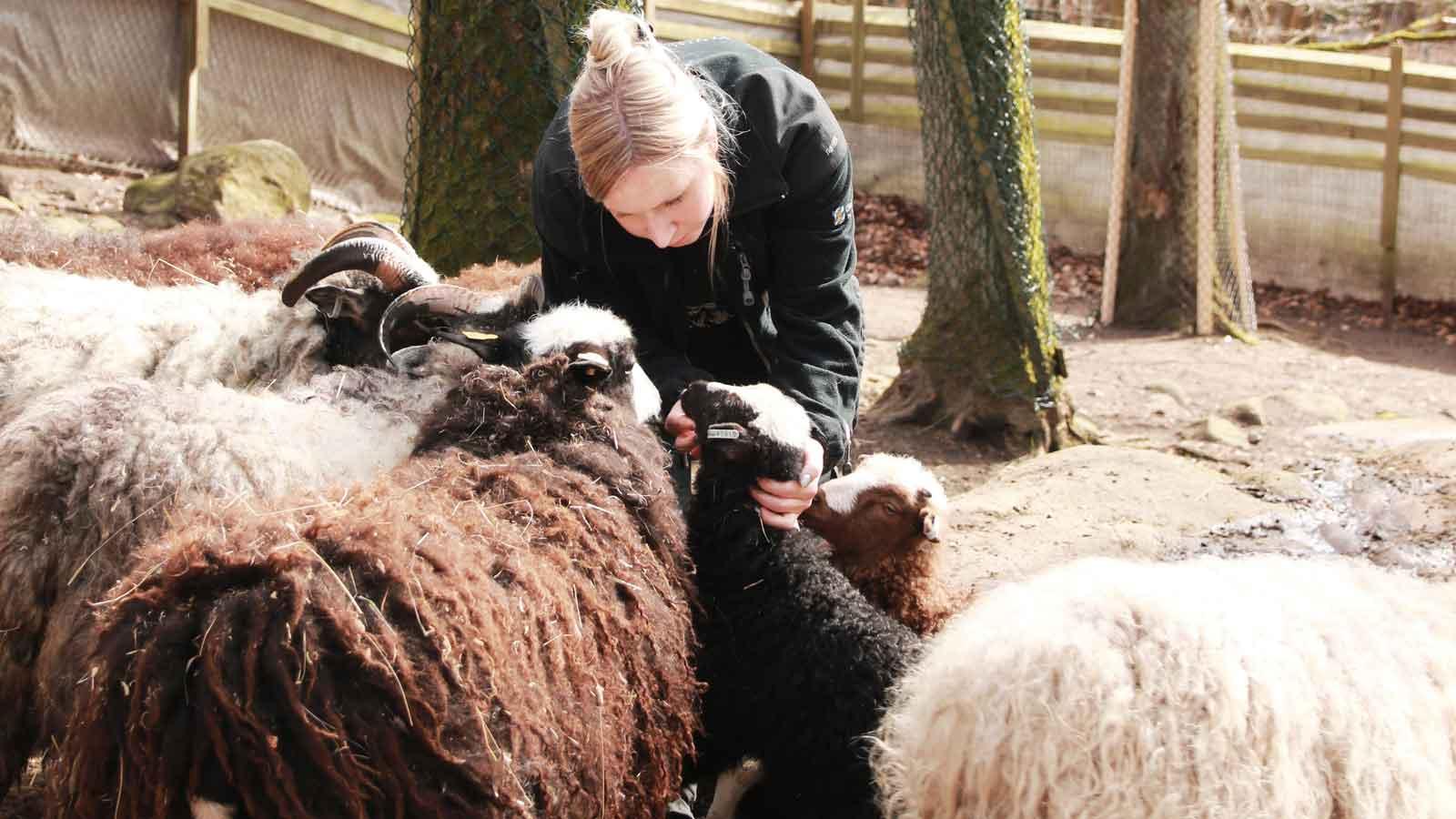 Barnens zoo har öppnat för säsongen  56bae9a11bcb4