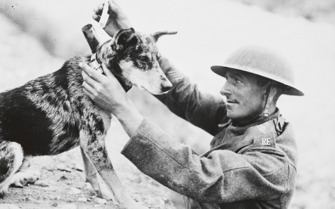"""""""Djuren var där tillsammans med soldaterna och upplevde samma saker"""", säger Hedvig Rudling. Bild: Australian War Memorial"""