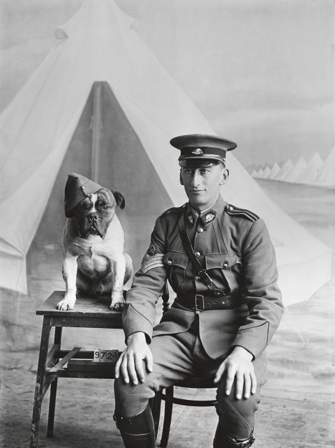 Djuren blev inte sällan en slags maskotar för soldaterna. Bild: Australian War Memorial