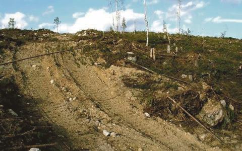 Bild: Skydda skogen, Olli Manninen