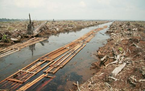 Skövlad regnskog för att ge plats åt stora plantager med palmodling för utvinning av palmolja i Indonesien. Något våra pensionspengar är inblandade i.  Bild: Wakx/Creative Commons