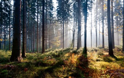 """Gemensamt. """"Typexempel på naturresurser som bör vara gemensamt ägda och kontrollerade är mark, vatten, vind, skog, malm, mineral, fisk och vilda djur."""" Bild: Flickr"""