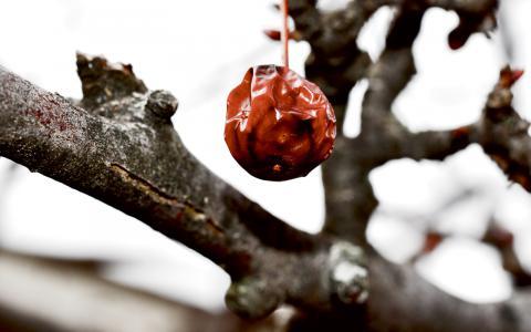 """""""Jag böjer mig framåt  och lutar pannan mot  barken och viskar förlåt."""" Bild: Ava Rose/Flickr"""