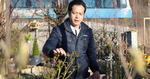 Tevinn Nguyen har bara haft sin odlingslott i två år. Bild: Hanna Strömbom