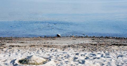 """""""Hur gammal Östersjön blir som ett levande hav återstår att se och avgörandet ligger i våra händer."""" Bild: Hasse Holmberg/TT"""