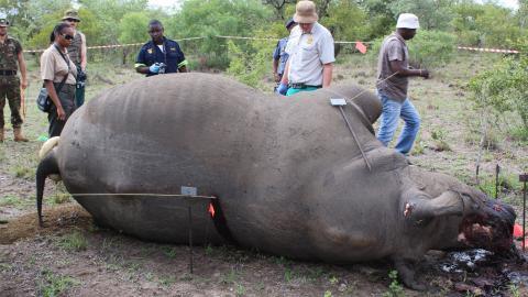 """På många håll krävs specialutbildade antitjuvjägarteam som bara jobbar OB-tid för att skydda noshörningarna. """" Det har gjort att många reservat gör sig av med noshörningar, för det är så dyrt att skydda dem"""", säger Markus Lutteman. Bild: Markus Lutteman"""