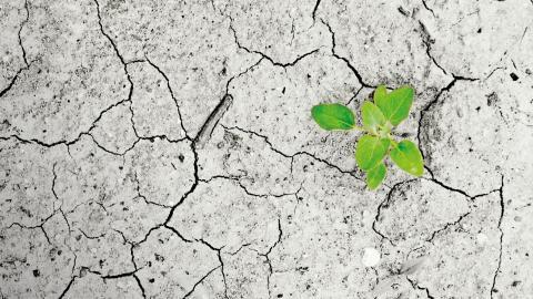 """""""Klimatförändringarna kommer inte bara påverka oss utan även efterkommande generationen på ett sätt som vi knappt kan föreställa oss. Det är vi, som samhälle, som bär ansvar för att bryta denna utveckling"""", skriver debattörerna."""