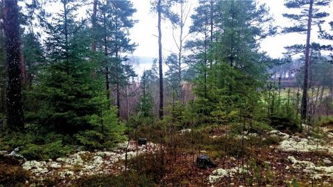 Politiker och tjänstemän måste ta mycket större hänsyn så att både vi, naturen och miljön mår bra nu när staden växer, tycker Naturskyddsföreningen i Norrköping.