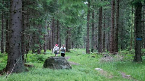 """""""Turismen nyttjar skogen på ett sätt som gör att andra funktioner som skogen har får finnas kvar"""", skriver debattörerna.  Bild: Terje Pedersen/TT"""
