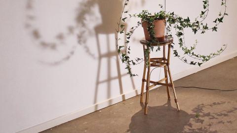 """På Supermarket Art Fair ställer Tobias Bradford ut en levande planta som med hjälp av motorer rör sig. """"Plantan är ett levande ting som genom rörelsen också känns som att den har ett medvetande och att den kan tänka, säger han."""" Bild: Press"""