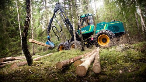"""""""Skogsstyrelsen förutsätter att skogsbruket fortsätter att undanta skogar med höga naturvärden från brukande. Det visar på en naivitet som är direkt olämplig för en myndighet med tillsynsansvar"""" Bild: David Magnusson/SvD/TT"""