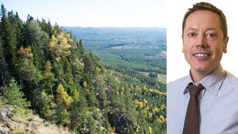 """""""Vi måste fyrdubbla skyddet av skog med höga naturvärden i Sverige för att känsliga arter ska klara sig"""" skriver debattören Frode Plym, Sverigechef på Greenpeace. Bild: Fredrik Sandberg/TT"""