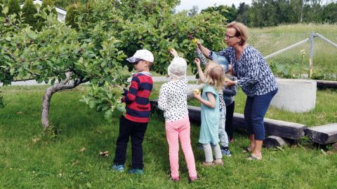 """""""Ingenstans passar Mor Stinas äpplen bättre än här"""", säger förskolepedagogen Ulla Forsberg. Bild: Karl-Gustaf Mattsson"""