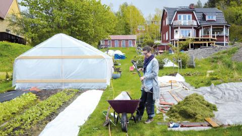 Ida Bergström använder en grep för att djupkultivera jorden i stället för att plöja.  Bild: Mia Berg