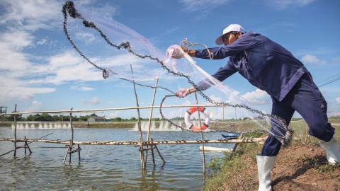 Anställda vid ASC-certifierade räkodlingar i Vietnam har bättre sociala förhållanden än vid konventionella odlingar. Bild: Jonas Gratzer