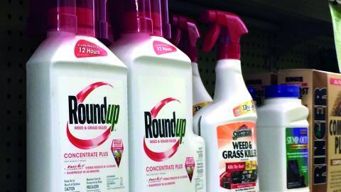 Helt vanliga ogräsmedel som exempelvis RoundUp innehåller det giftiga ämnet Glyfosat.       Bild: Reed Saxon/TT
