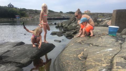 Johanna Rönneke och döttrarna Shantalee och Ayanna fiskar krabbor i Lerkil med kompisen Arvid Rose. Barn är ovärderliga detektiver för forskarna i jakten på främmande krabbarter. Bild: Kajsa Sjölander