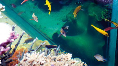 Olika arter lever på olika ställen i revet. Foto: Annelie Moran