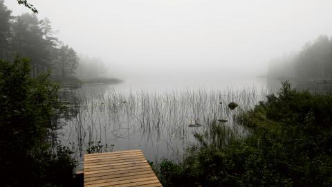 Det moderna barrskogsdominerade skogsbruket kan ligga bakom brunfärgningen av landets sjöar, misstänker forskare vid Lunds universitet. Bild: Hasse Holmberg/TT