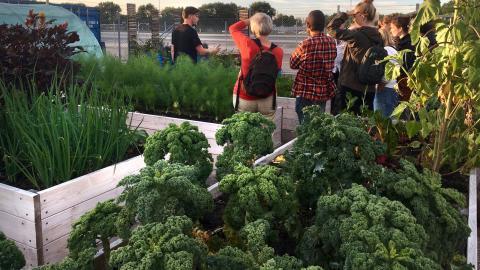 Trädgårdsintresserade på stadsodlingssafari i Frihamnen i fjol. Sedan den första stadsodlingssafarin hölls 2011 i Göteborg har antalet planteringar ökat. Just nu finns omkring 200 initiativ bara i Göteborg.