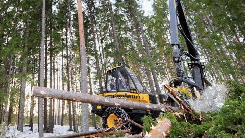 Den stora stötestenen mellan Sveriges linje och EU-kommissionens är referensnivån för när avverkningen av skog ska anses vara en belastning för klimatet och hur den gränsen ska sättas.  Bild: Robert Granström/TT