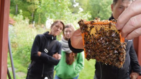 Björn Lagerman förklarade hur ett bisamhälle fungerade bland annat genom att visa upp levande bin som det var tillåtet att vidröra för den hugade. Bild: Rolf Larsson