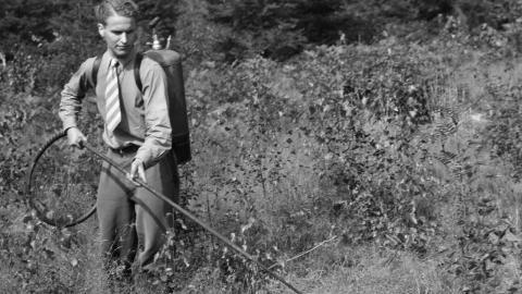 Hormoslyr förbjöds 1977. Fram till dess användes det för bekämpning av sly. Bild: SvD/TT