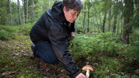 Anki Arvidson utbildade sig till svampkonsulent på Statens skola för vuxna 1992 och        jobbar med att ordna utställningar och förmedla kunskaper om svamp på olika utflykter.  Bild: Niclas Sandberg