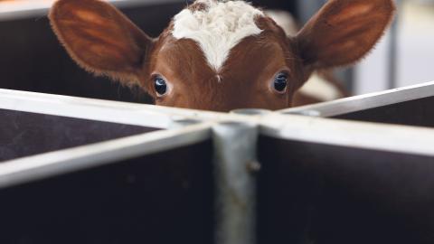 """""""Oavsett vilket straff vi får för våra djurfritagningar så är jag hoppfull inför framtiden"""", skriver dagens debattör. Bild: Amel Emric/AP/TT"""