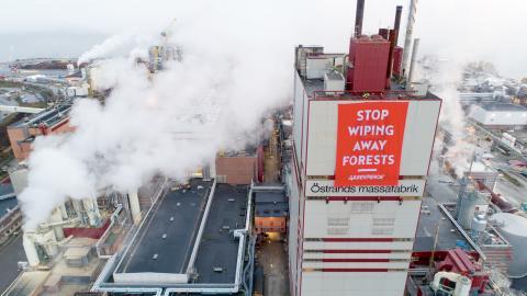 Greenpeace-aktivister blockerade ingången till SCA och hänga upp banderoller över fabriken – nu misstänks de för olaga intrång. Bild: Jari Stahl/Greenpeace