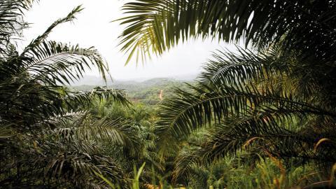 Regnskog på Sumatra, Indonesien. Bild: Heiko Junge/NTB/TT