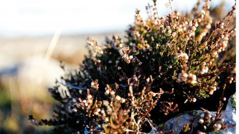 Det karga kustlandskapet som karakteriserar öarna ska bevaras och vårdas. I och med reservatsbildningen skyddas det även från exploatering. Foto: Annelie Moran