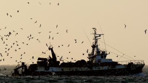 """""""Det finns heller inga övertygande bevis för att vinsterna från fiskeavtalet mellan EU och Marocko kommit västsaharierna till godo"""", skriver debattörerna.  Foto: Armando Franca/AP/TT"""