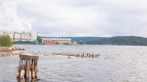 Utanför Ortviken i inre Sundsvallsfjärden finns stora lämningar från skogsindustrin. Det handlar om några av de giftigaste ämnena vi känner till som tillsammans med trärester från industrin bildar enorma döda områden på havsbotten.  Bild Anna Thors