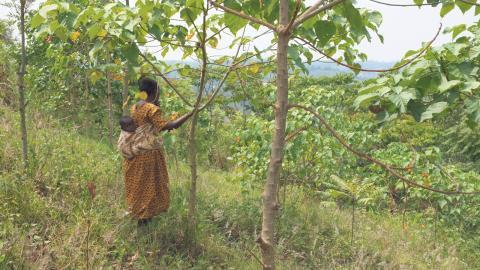 Trädplanteringsprojektet Trees for Global Benefits i Uganda, som pågått sedan 2003, får kritik av småbrukare för oklarhet kring projektets syfte och villkor.