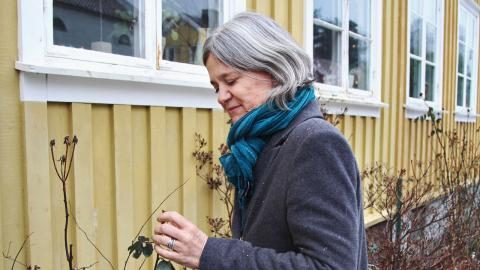 Att rosorna blommade i november blev droppen för Ragnhild Larsson. Bild: Sanna Arbman Hansing