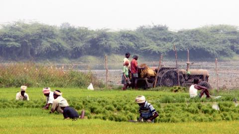 Värmen kan bli intensiv under en arbetsdag för de indiska jordbruksarbetarna.  Bild: Karin Lundgren-Kownacki