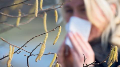Nu inleds pollensäsongen.  Bild: Fredrik Sandberg/TT