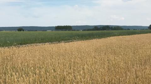 På Anders Lunneryds gård i Västergötland syns skillnaden mitt i extremtorkan. På ena sidan gul och tidigare konventionellt odlad mark, och på andra sidan grön mångårig ekologisk odlad mark. Bild: Anders Lunneryd