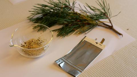Grundmaterialet till det nya batteriet är tallkåda och alfalfa. Bild: Daniel Brandell/Uppsala universitet