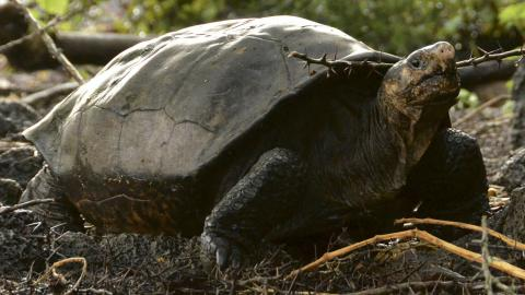 Galapagos National Park via AP