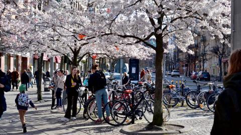 På cykelparkeringen vid Järntorget samsas elcyklar med vanliga traditionella. Förra året såldes 103000 nya elcyklar i landet, vilket motsvarar nitton procent av nyförsäljningen av cyklar. Bild: Ylva Bowes