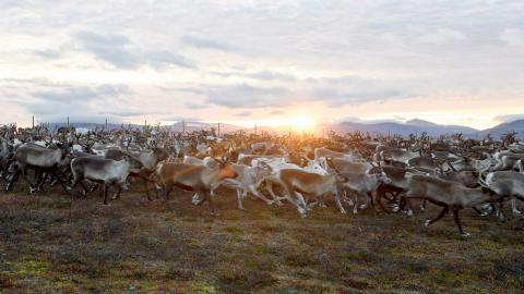 """""""i de nu aktuella fallen finns starka miljöskäl, mycket allvarliga konsekvenser för rennäringen och samhällsekonomiska skäl som talar för ett nej"""". Foto: Henrik Montgomery/TT"""