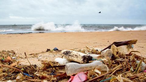 Ett forskarteam från Australien kan för första gången visa hur plastföroreningar påverkar havens allra minsta organismer. Specifikt cyanobakterien prochlorococcus, världens minsta och vanligaste syrebildare. Bild: Gemunu Amarasinghe/TT