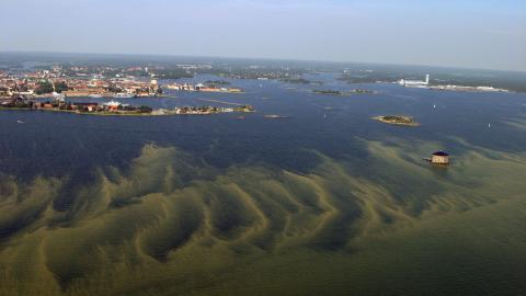 Algblomning utanför Karlskrona.  Bild: Kustbevakningen/TT