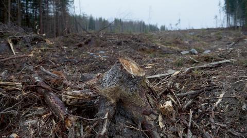 I en rapport från Greenpace pekas svenska SCA ut som ett av de bolag som bidrar till den globala skogsskövlingen.  Bild: Fredrik Sandberg/TT