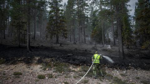 Personal från hemvärnet hjälpte till att släcka skogbranden vid Älvdalens skjutfält, sommaren 2018. 8 000 friviliga erbjöd sig att hjälpa till vid bränderna, men bara 800 behövdes.  Bild: Adam Wrafter/TT