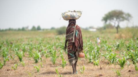 Länder i södra Asien och västra Afrika är redan utsatta och ojämlikheten i världens ekonomi kommer att öka i takt med temperaturen. Bild: Shutterstock