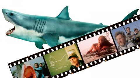 "Bild: Shutterstock / ""Jaws"""