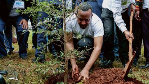 Ett land som tycks ha tagit sig an uppgiften att plantera träd för klimatets skull är Etiopien. I slutet av juli meddelade landet att rekordmånga 350 miljoner träd planterats på en och samma dag.